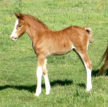 fillyfoal1